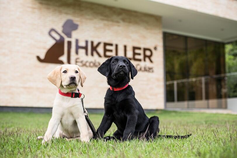 Rotas Comunicação - Ação – Campanha vai escolher nome de futuros cães-guia da escola Helen Keller