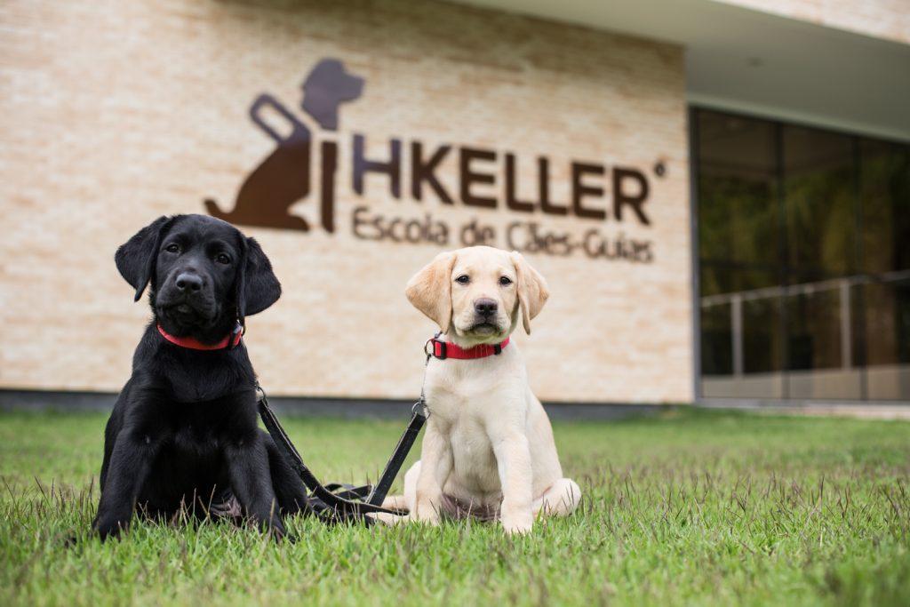 Rotas Comunicação - SOLIDARIEDADE – Escola Helen Keller precisa de ajuda financeira para manter as atividades com cães-guias